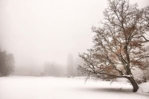 Winter Dream III by tomsumartin