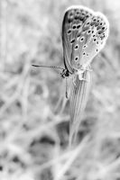 Butterfly 10 by Youcef07