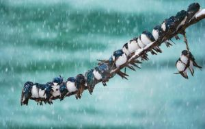 Snow Animals Birds Cute | jsoncrown by JsonCrown