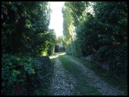 Viale by Anere