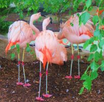 The Zoo: Flamingos by en-visioned