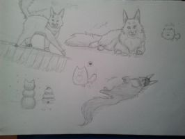 Cat Sketches by TwoEye