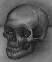Still Life- Skull by luc722