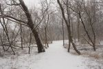 Winter Forest 6 by NessaPalmerStock