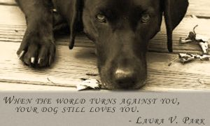 The Love of Dogs is a Great Love by RainbowStr8ghtJacket