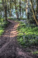Bluebell Woods - HDR by teslaextreme