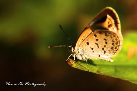 Butterfly by bywd2002
