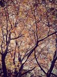 branches by TimTindall