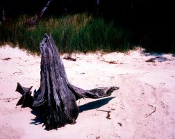 Driftwood by rdswords