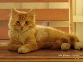Smiling Snickers by liselan
