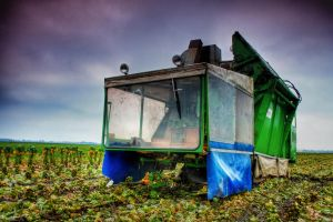 Brussels Sprouts Harvester by JoostvanD