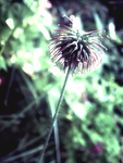 Photo - Flower Study26 by firstfear