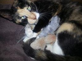 Cali with her new born kittens by rjacks1
