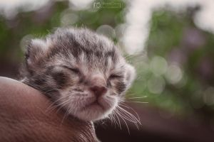 Newborn kitty by aleexdee