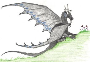 Young Temeraire by Fantasybond