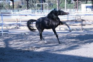 black horse stock 12 by xbr0kendevotion