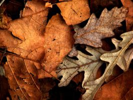 Feuilles mortes by Kathnightmare