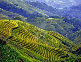 Longshen Rice Terraces by Arianey