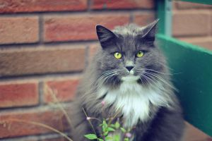 Urban Cat III by Sortvind