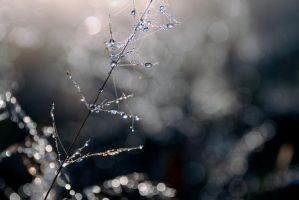 Raindrops by AK-Photog