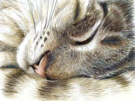 Aww.. so sleepy.  Tabby Cat by bigcatdesigns