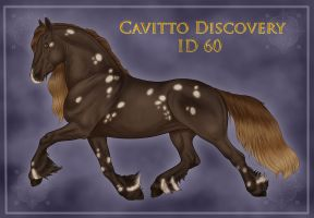 Cavitto Discovery 60 by sVa-BinaryStar