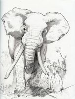 Elephant by ChineseWarri0r