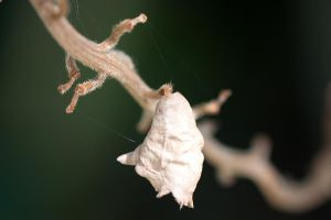 Cocoon by mult1
