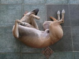 How my dog sleeps by lady-storykeeper