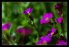 dancing in the breeze by LordLJCornellPhotos
