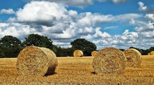 Let's make hay. by paulcaddy