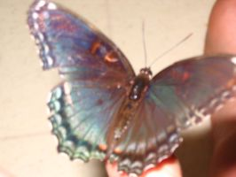 Blue-Teal Butterfly by mcrwayperfect09