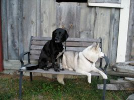 Doggies on the Bench by 4ever-rider