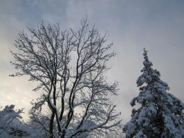 Snowscapes #5: Above the Treetops by Guardian-of-Legends
