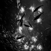 Dark Water by Caysi