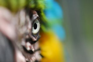 The Eye of Macaw by NagWolf