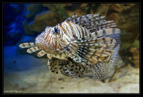 The Lionfish by mym8rick