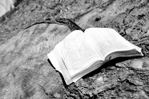 Rooted in the word by tinfire