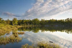 Torrance Barrens by JamesHackland
