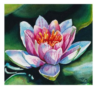 Pink water lily by tiiko24