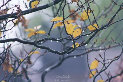 Autumn leaves~ by MelissaBalkenohl