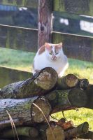 Get your own logs by wouterpasschier