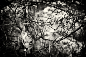 Curiosity and The Cat by ArgentumChloride