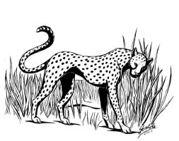 Gepard - Cheetah by KekPafrany