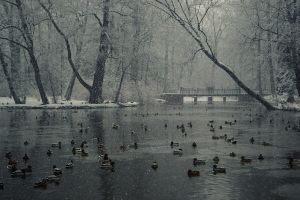 Charming winter by MoradoPhotography