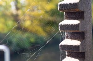 Spiderweb by JPaulBelmondo