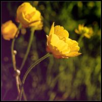 Buttercup again by alone-maggie