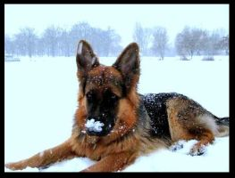 Snow on the nose by Honcia