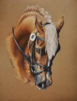 Dressage - pastel by NutLu