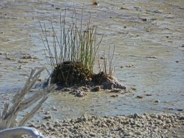 Grass Island in Steaming Mud by Synaptica